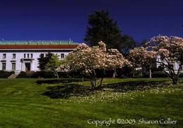 Springtime at UC Berkeley