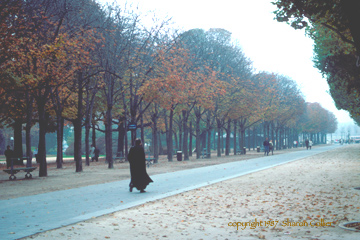 Autumn on the Champs Elysees