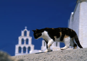 Cat On a Hot Stone Rooftop