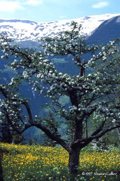 Springtime in Grindelwald