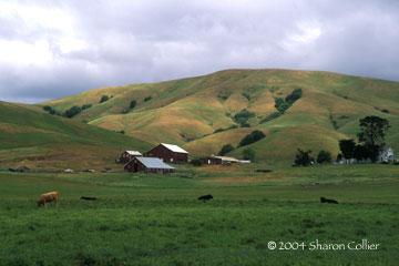 Sonoma Ranch