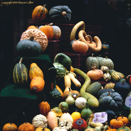 Harvest Squash in Burgundy