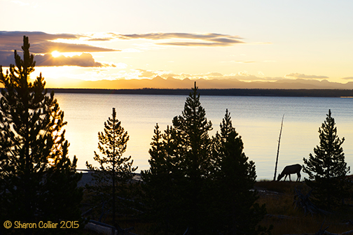 Elk Silhouette at Dawn - Yellowstone Lake