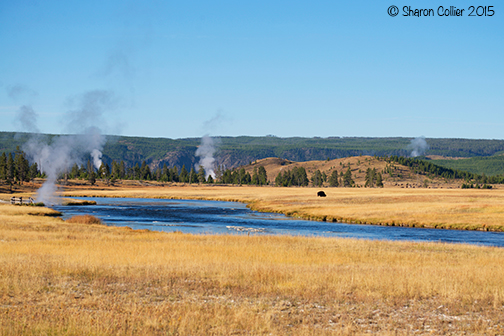 The Firehole River in Yellowstone