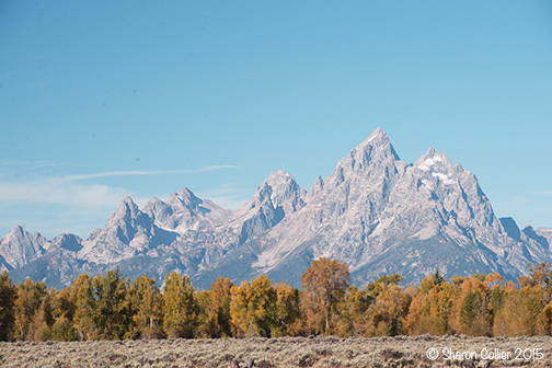 Autumn in The Grand Teton National Park
